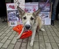 Уничтожение собак в Украине