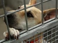 Помощь бездомным животным в Курске