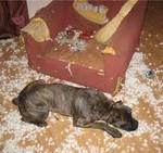 Ремонт в квартире с животными