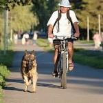 Собака и велосипед