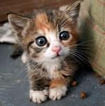 Гипотермия у котят