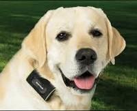 Собак поставят на учет