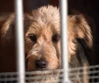 Помощь животным в Бердске
