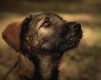 Помощь животным в Воронеже