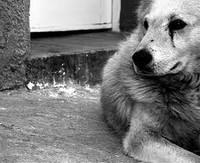 Помощь животным в Бресте