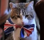 Кот Ларри поймал мышь