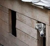 Помощь животным в Брянске