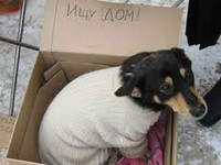 Помощь животным в Обнинске