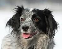 Помощь животным в Алматы