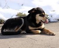 Отравление собак в МГУ