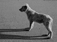 Депортация бездомных собак