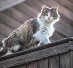 Кошки любят высоту