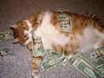 Кот миллионер