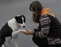 Помощь бездомным животным в Павловске