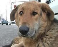 Депортация собак из Москвы в Ярославль