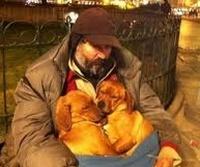 Помощь бездомным животным в Воронеже