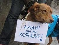 Помощь бездомным животным в Нижнем Новгороде