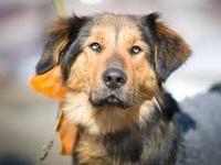 Помощь бездомным животным в Самаре