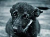 Помощь бездомным животным в Качканаре