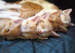 Закон о содержании кошек