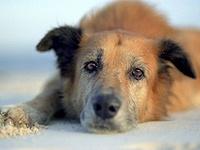 Защита бездомных животных в Обнинске