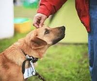 Помощь бездомным животным в Ноябрьске