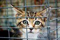 Приют для кошек в Казахстане
