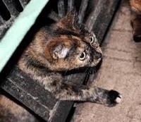 Помощь бездомным животным в Набережных Челнах