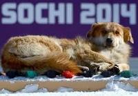 Приют для бездомных животных в Сочи