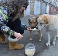 Помощь бездомным животным во Владивостоке