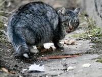 Помощь бездомным кошкам в Подмосковье