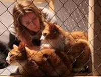Помощь бездомным животным в Челябинске