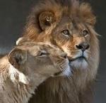 Любовь и животные