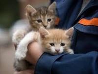 Помощь бездомным животным на Сахалине