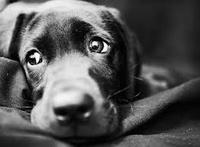 Помощь бездомным собакам в Кожухово
