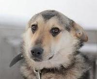 Приют для животных в Нижнем Новгороде