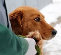 Приют для животных в Петрозаводске