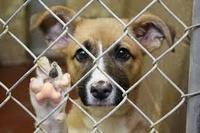 Помощь бездомным животным в Калининграде