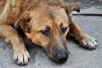 Защита животных в Дагестане
