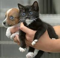 Помощь бездомным животным в Петрозаводске