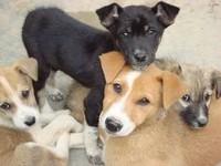 Помощь животным в Ангарске