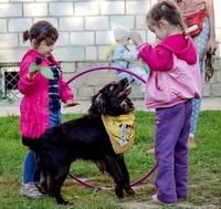 Помощь животным в Казани