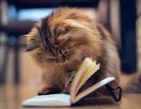 Книги для кошки