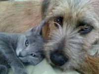 Помощь животным в Новгороде