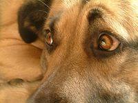 Помощь бездомным животным в Мурманске