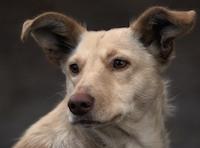 Приют для бездомных животных в Петрозаводске