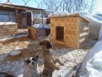 Помощь бездомным животным Рубцовска