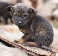 Помощь животным в Пензе