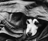 Помощь животным в Донецке