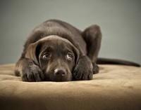 Помощь бездомным животным в Брянске